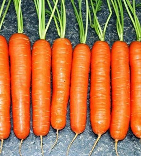 Primary image for 1500 Seeds Scarlet Nantes Carrot