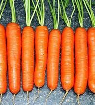 1500 Seeds Scarlet Nantes Carrot - $13.86