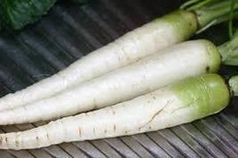 15 Pcs Lunar White Carrot Seeds, Heirloom Organic Delicious Vegetable BD... - $5.99