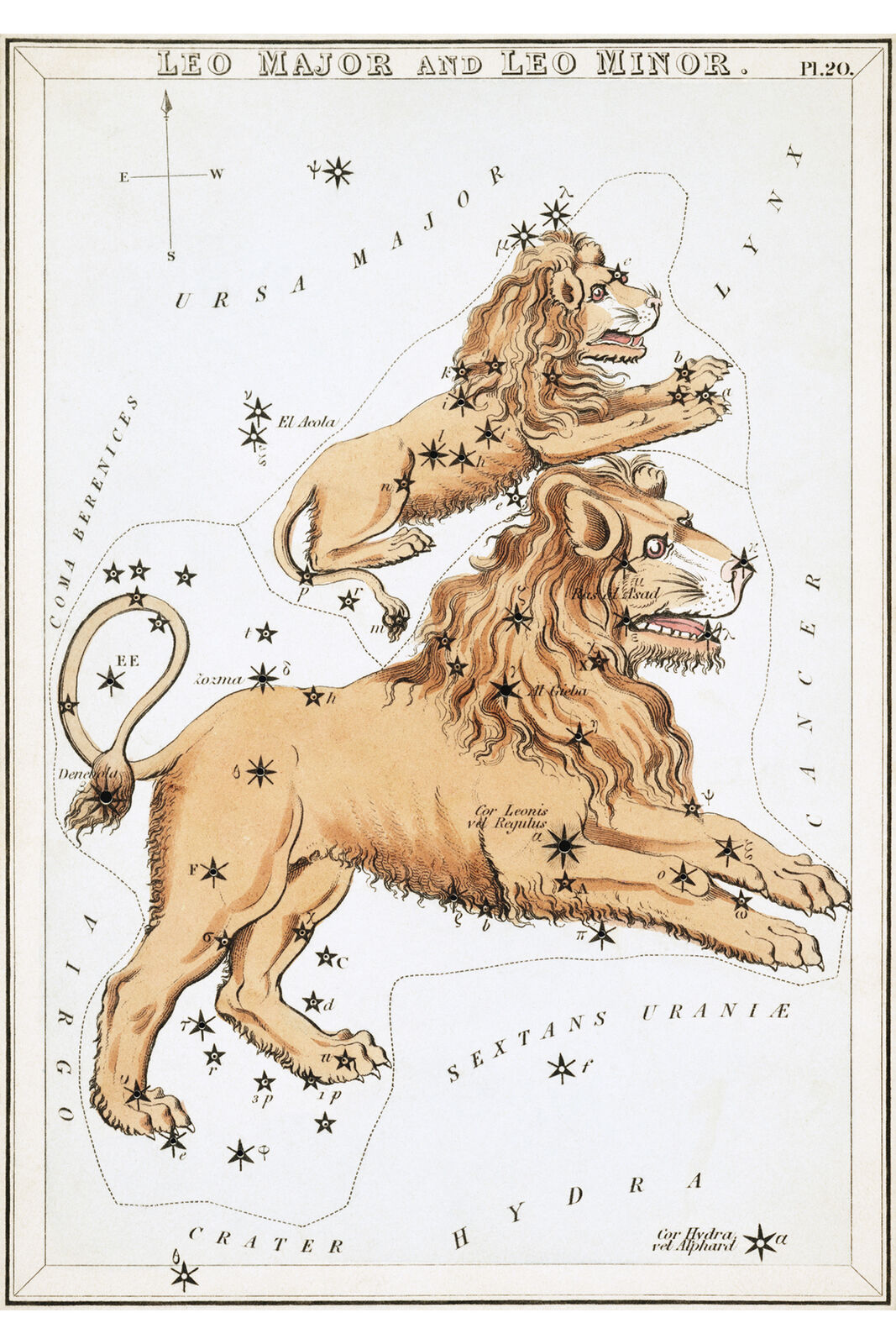 Leo Constellation; Astrology Star Chart; Zodiac Engraving by Sidney Hall