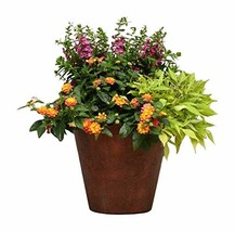 Burpee Combo 'Simpatico' - Create Instant Colorful Container Gardens wit... - $45.87
