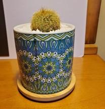 Golden Ball Cactus in Blue Ceramic Mandala Planter Pot, Parodia leninghausii  image 3