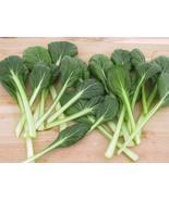 500 Seeds of Brassica Rapa VAR. Rosularis - Tat SOI Chinese Cabbage Non-... - $5.83