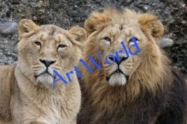 Digital download,Lion Couple,Photography,Christmas decor,Wall hangings,P... - $4.50
