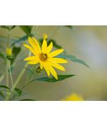 """""""Quiet Sunflower,"""" an A. Rose Designs (tm) note card - $5.95+"""