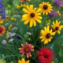 SHIP From US Wildflower Pacific Northwest Mix Seeds (7g+Seeds) UTS2 - $24.99
