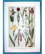 BOTANICAL PRINT 1896 COlor Litho - ORCHIDS Lady's Slipper Lily Iris Glad... - $16.83