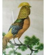 Vintage Axel Amuchastegui Golden Chinese Pheasant Bird Art Print - $14.99