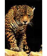 2400 1163 b leopard posters thumbtall
