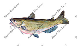 High Quality Vinyl Fish Decal - Channel Catfish - $5.99