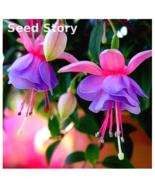 100Pcs Fuchsias bonsai Potted Flower Diy Plants For Garden Flowers Bell Flower - $67,31 MXN