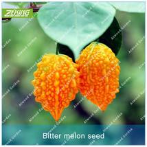 10PCS Momordica Seed Vegetable Seeds Bitter Melon Bonsai Plants For Home... - $4.76