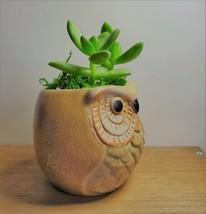 """Golden Sedum Succulent in Ceramic Owl Planter, Live Plant, 2.5"""" Animal Pot image 7"""