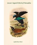 Lophorhina Minor - Lesser Superb Bird of Paradise by John Gould - Art Print - $19.99 - $179.99