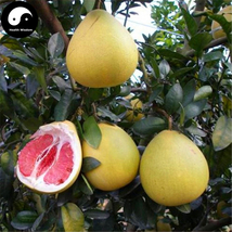 Buy Grapefruit Tree Seeds 100pcs Plant Citrus Maxima For Grapefruit Chin... - $15.99