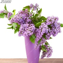 100 PCS Summer Aromatic Flower Colorful Lilac Seeds Bonsai Quality Decor... - $2.18