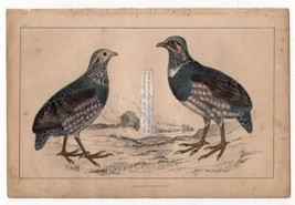 Large Footed Partridge Birda c1860 Hand Colored Lithography Print - $18.58