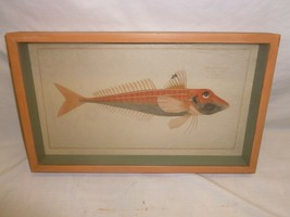 Vtg Shadow Box Fish Print Wall Hanging Art Plaque Cabin Hunting Lodge Decor - $44.99