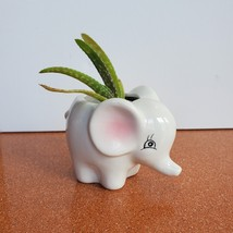 Mini Elephant Planter with Aloe Vera Succulent, Ceramic Animal Pot, Live Plant