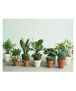 "Combo of 4 Best Air Clean Live Plants Fit 4"" Pot - Clean Air Plants for ... - $12.99"