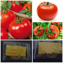 Tomato ''Campbell 33'' ~30 Top Quality Seeds - Sweet Variety! - $14.98