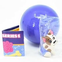 Funko Paka Paka Daisy Dukes Dogs Tushie French Bulldog 1/18 Chase Mini Figure