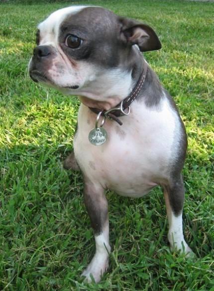 King of Farts Dog Tag