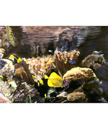 In The Deep VI  (An Original Painting Set in an Aquarium) - $1,800.00