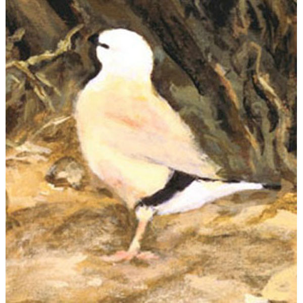 Yellow (An Original Painting of the Black-Throated Finch)