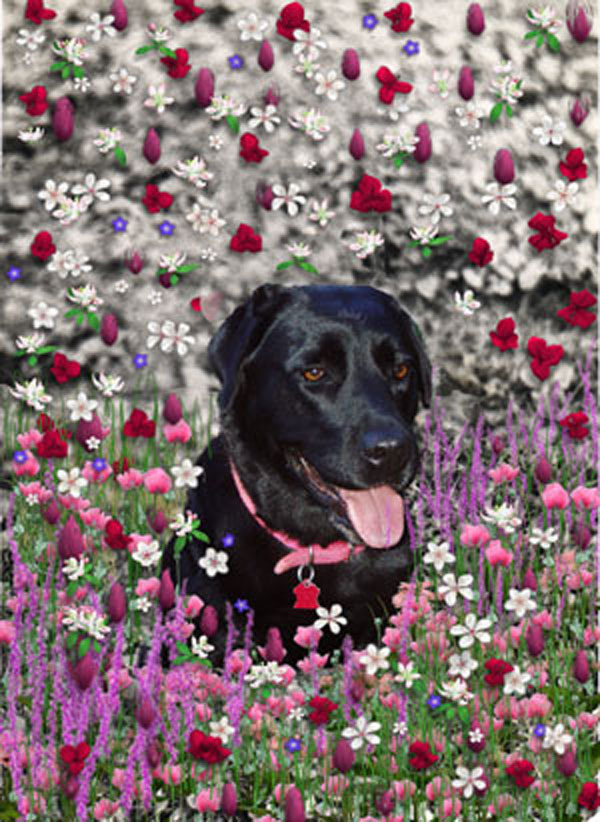 Abby in flowers 600