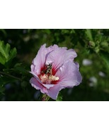 Bee Looking Like It Was Photoshopped (Photo Print) - $21.00