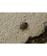 Stinkbug Catch and Release (Photo Print) - $21.00
