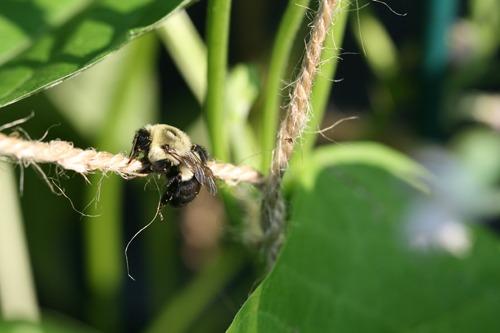 Beehanging