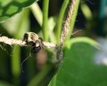 Beehanging thumb155 crop