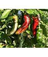 Pepper Anaheim Chili Very Mild Non GMO Heirloom Garden Vegetable Perfect... - $3.73