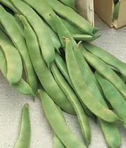 Original Italian Prolific Green Romano Flat Pole Bean Heirloom Seeds - $2.62+