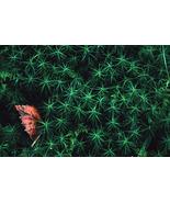 """Leaf Peeping"" 11x14 matted print - $20.00"