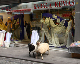 Fancy Dresses and Taxidermy Sheep 11x14 matted print - $20.00