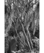 Churchyard Cemetery 11x14 matted print - $20.00