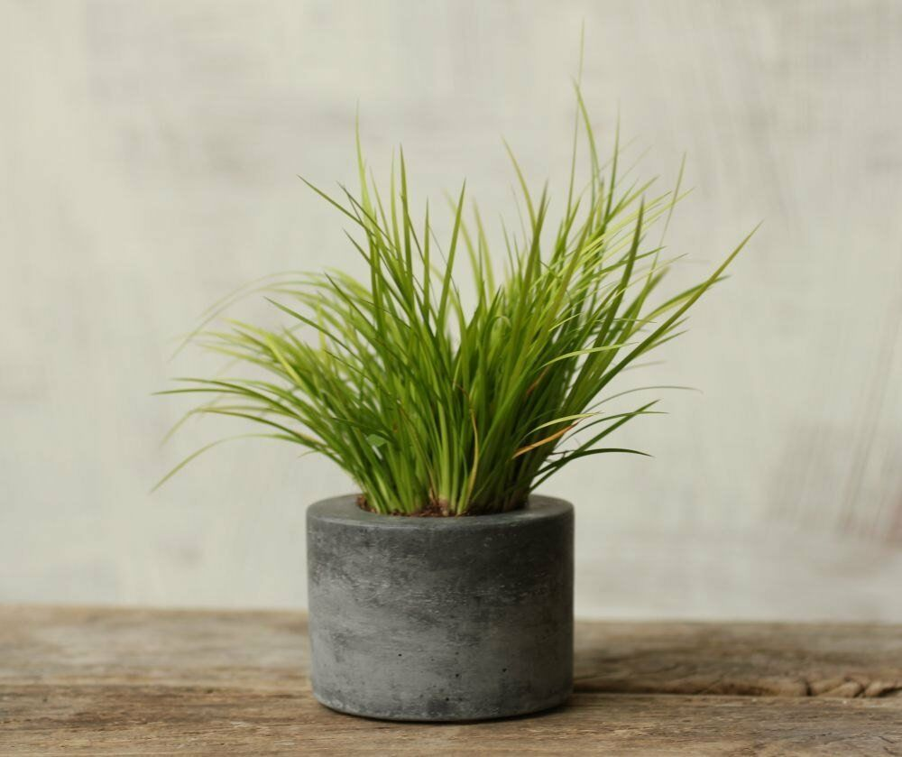 Primary image for Little Concrete Planter Flower Pot Handmade Home & Garden Decor Natural Gray