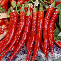 Non GMO Cayenne Long Slim Pepper - 50 Seeds - $7.99
