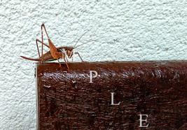 Digital Picture Image Photo Wallpaper JPG Insect Animal Summer Desktop S... - $1.77