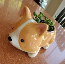 "Corgi Dog Planter + Succulent, String of Beads, 5"" Puppy pot, curio herreianus image 5"