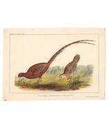 1856 Phasianus Soemmeringii Cmdre Perry Japan Expedition Wm Hitchcock Li... - $14.95