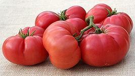 New Big Dwarf Tomato Seeds (100 Seeds) - $9.99