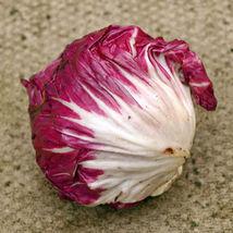 "Palla Rosa - Radicio ""Cichorium Intybus"" 25+ Annual Seeds - $8.22"