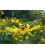 Beautiful Yellow Wildflower - Digitial Download - $2.99