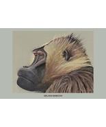 Gelada Baboon by Louis Agassiz Fuertes - Art Print - $19.99 - $179.99