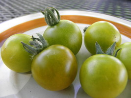 Bosque Green Cherry -  delicious green when ripe cherry tomato - $4.50