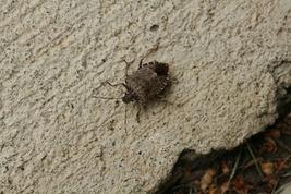 Stinkbug Catch and Release (Photo Print) - $12.00